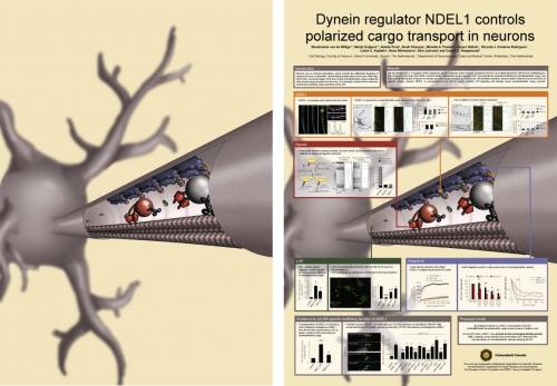 3D-illustratie (A0) van een hersencel voor wetenschappelijke poster (2015)